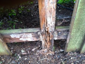 Replace fence if posts are rotted