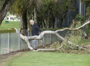 Keep trees maintained over fence lines to prevent unwanted fence repairs
