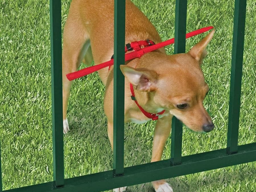 Small Dog Fence 7 Factors To Consider Before Installing