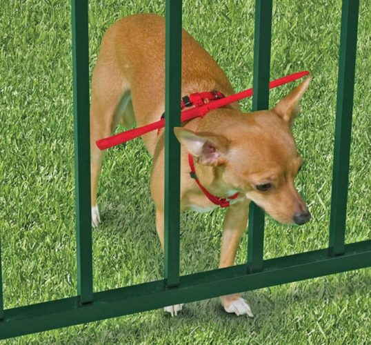 7 Things to Consider When Getting a Small Dog Fence | FenceOKC.com
